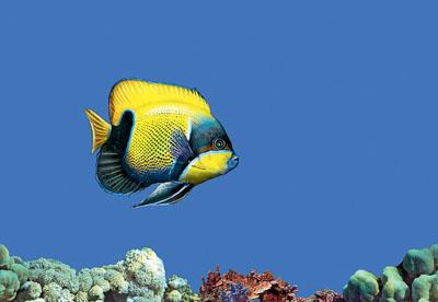 Декор Fish 1
