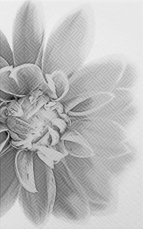 Камелия черн 03 Декор