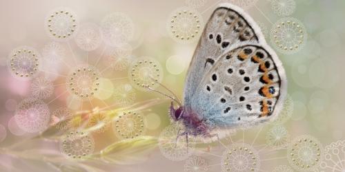 декор Мечта Бабочка 08-05-23-371-1
