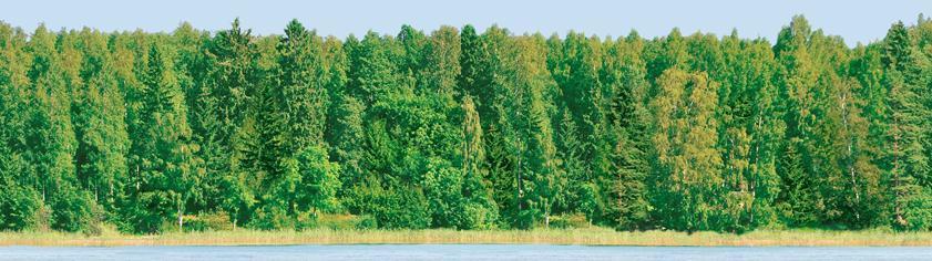 Panno Forest (панно из 2-х шт)
