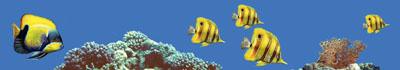 Бордюр Fish