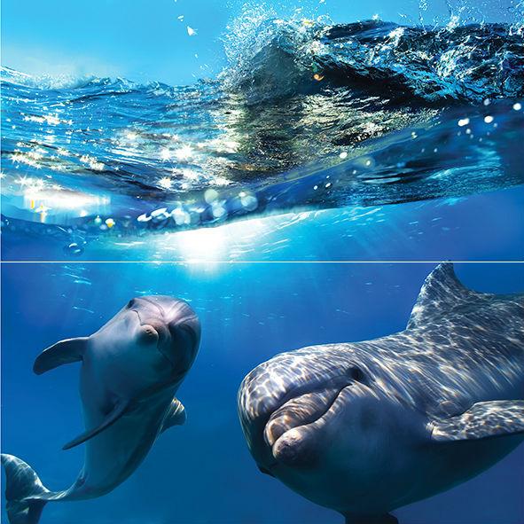 Панно Dolphins (из 2 шт.) 50х50