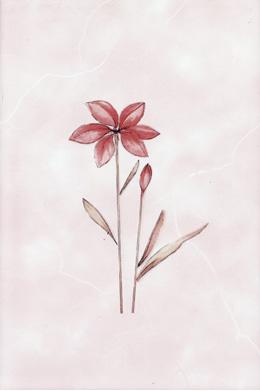 Валентино роз. декор
