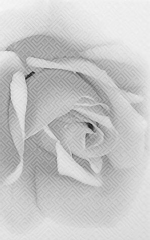 Камелия черн 02 Декор