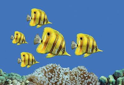 Декор Fish 2