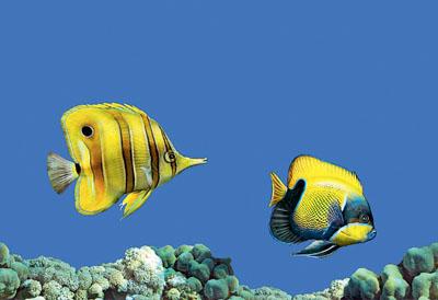 Декор Fish 3