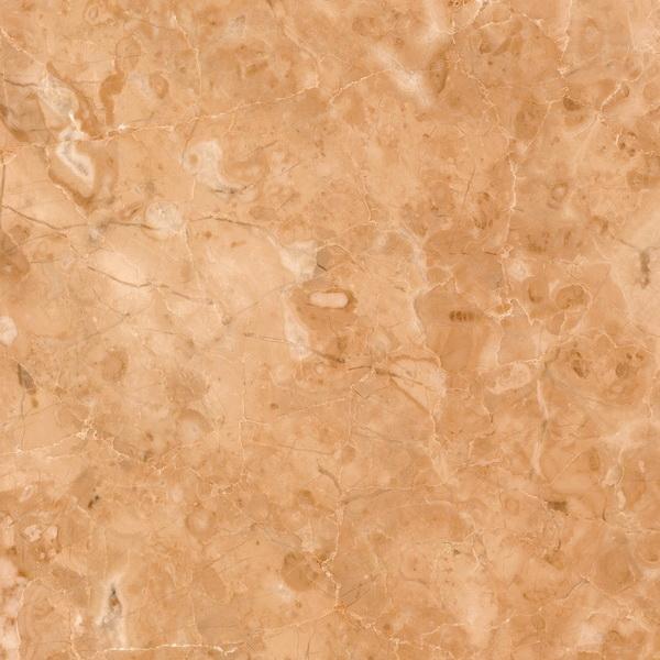 Kamelia кремовая